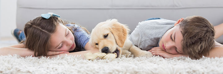 Pet Safety Tips Free Download